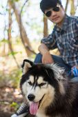 Siberian Dog In The Woods With A Young Man. poster