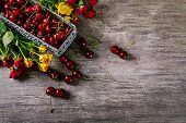 Ripe Cherry On The Table. Ripe Cherries In A Metal Basket. Flowers Nearby. Delicious Berries. Backgr poster