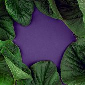 Creative Nature Leaves Layout. Supernatural Concept, Ultra Violet Colors Background, Fashion Style,  poster