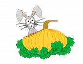 stock photo of nursery rhyme  - The head of a rabbit behind a partially eaten pumpkin - JPG
