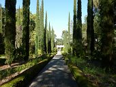 Formal garden at Villa Montalvo
