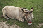 picture of jack-ass  - this is a rescue donkey recovering from a hard life - JPG