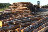 Lumber Ready For Export, Coos Bay Oregon.