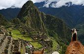 Machu Picchu, Peru, s lamy