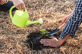 Environment Earth Day, Hands Of Two Man Helping Were Planting The Seedlings And Growing Of Young Spr poster