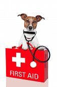 stock photo of emergency treatment  - dog with a red first aid kit - JPG