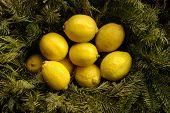 Christmas Lemons