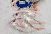 stock photo of red snapper  - New Zealand red snapper fish on ice in the market - JPG