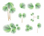 Isometric Of Lady Palm Tree On White Background