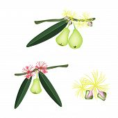 Set Of Green Water Apple On White Background