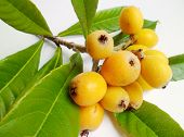 image of loquat  - Yellow loquat fruits with green leaves on white background - JPG