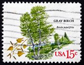 Postage Stamp Usa 1978 Gray Birch, Deciduous Tree