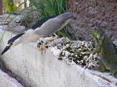 Iguana And Bird
