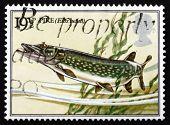 Postage Stamp Gb 1983 Pike Fish