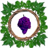 grape frame
