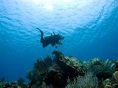 Diver Descending On A Cayman Island Reef