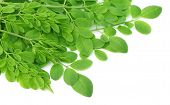 Edible moringa leaves over white background