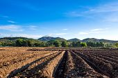 Prepare The Planting Crop Vegetable.