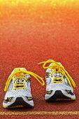Sneakers  Tartan Vertical