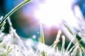 Abstract Image Of Frosty Grass Blades With The Sun Behind