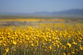 Beautiful Wild Flowers: Yellow