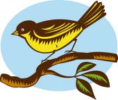 foto of fantail  - illustration of a New Zealand fantail bird on a branch done in retro woodcut style - JPG