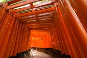 Thousands of Torii, Fushimi Inari Taisha Shrine, Kyoto, Japan.