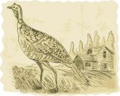 stock photo of wild turkey  - Hand sketched illustration of a Wild turkey - JPG
