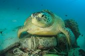image of green turtle  - Environmental problem - JPG