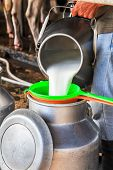 Worker Pouring Milk Into A Container