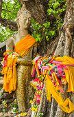Buddha Under The Tree Stand In Maha Sarakham, Thailand