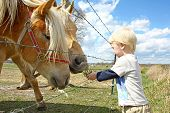pic of feeding horse  - a very young child is standing by a farm fence in the country feeding grass to two horses - JPG