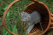 little kitten in basket