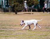 Dog in a park