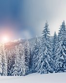 Fantastic landscape glowing by sunlight. Dramatic wintry scene under blue sky. Carpathian, Ukraine, Europe. Beauty world. Retro filter. Instagram toning effect. Happy New Year!