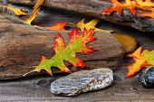 pic of driftwood  - Single wet bright autumn oak leaf front center with aged driftwood and rocks in background - JPG