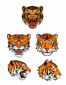 Tiger Head Collection