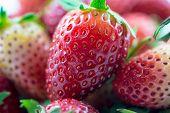 Fresh Strawberry Closeup
