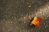 Beautiful autumn leaf on road