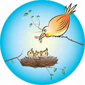 Feeding Chicks