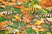 Abstract Background Of Fallen Leaves.