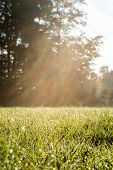 Fresh Look Grassy Field With Sun Rays
