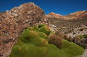 Green Plants in the Atacama Desert