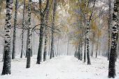 Snowstorm In Autumn Park