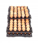 Eggs In Tray On White Background
