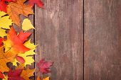 Autumn leaves on a board background