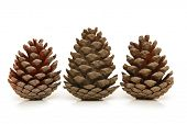 Christmas tree pine cones isolated on white