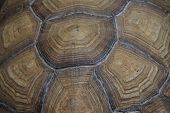 image of turtle shell  - Shell texture turtle brown and green  - JPG