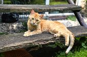 image of tabby-cat  - Sweet short hair orange tabby cat with green eyes lying on wooden porch stairs - JPG