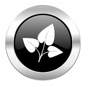 leaf black circle glossy chrome icon isolated
